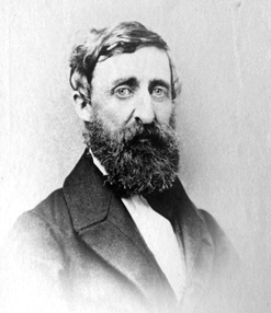 Image of Thoreau portrait