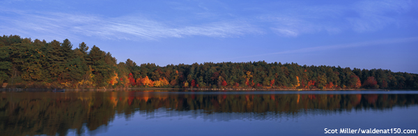 Scot Miller's Walden in the fall