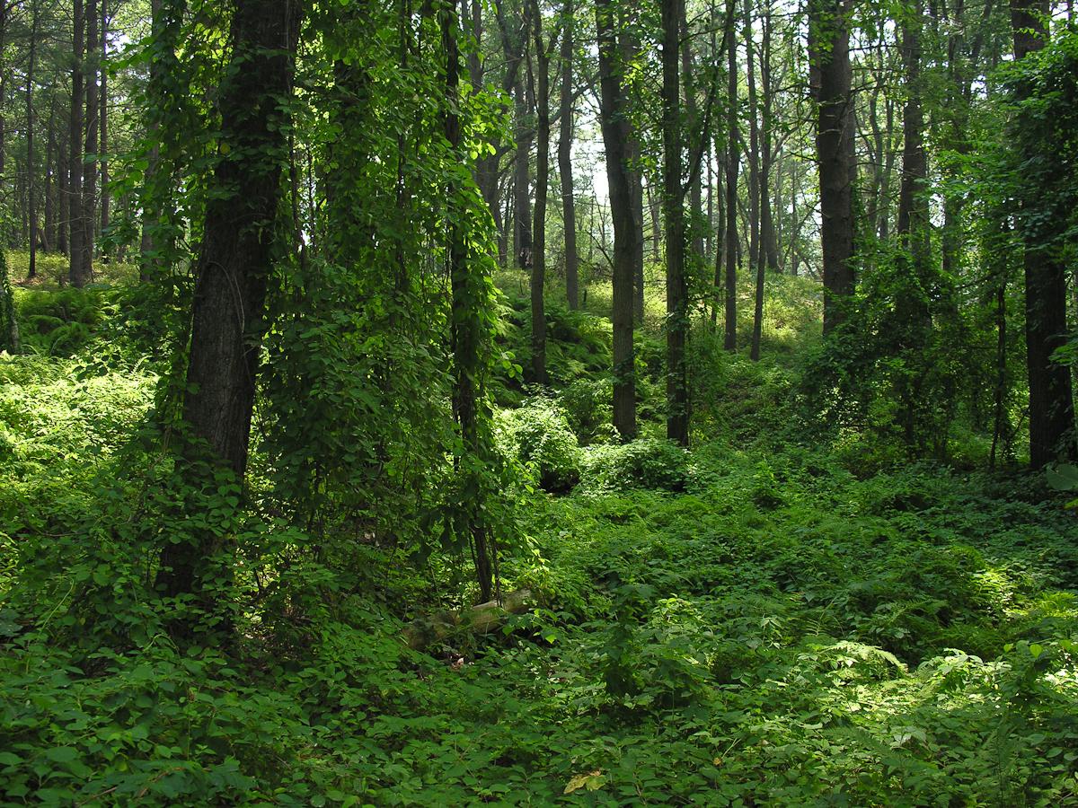 Bear Garden Hill 4