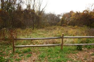 Old field restored by invasive plant management