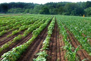 Farm farm_20080627-16cr