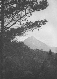 III.Pine Tree & Boar Mountain_[WWP]