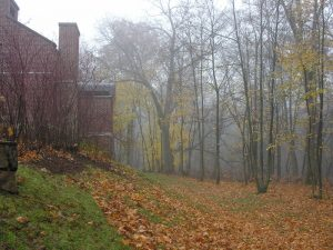 Thoreau Institute TI fall fog 04