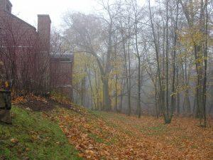 Thoreau Institute TI fall fog 04