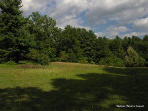 Thoreau Institute adams fields 05