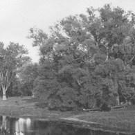 VI.Thoreau''s Boat-landing_[WWP]_detail