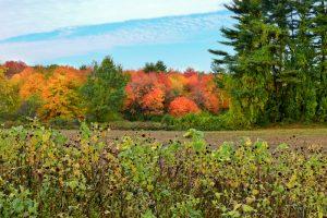Brilliant fall foliage