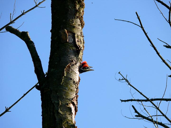 biodiversity day 2009-1