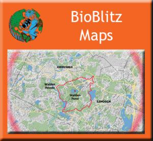 button-bioblitz maps